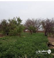 روستای سرو علیاء