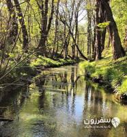 جنگل بونده