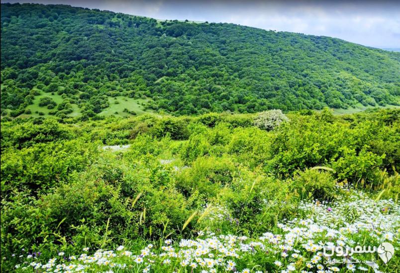 جنگل فندقلو