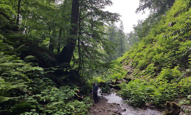آغوزحال| سفر به جنگلهای دو هزار