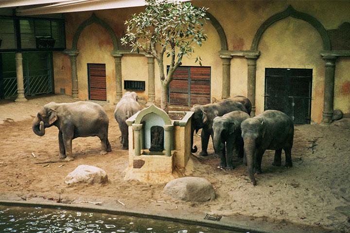 باغ وحش هاگنبک آلمان