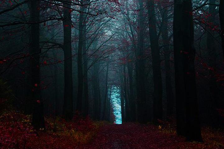 جنگل سیاه آلمان   جاهای دیدنی آلمان