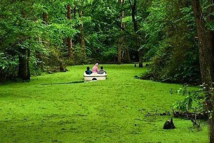پارک جنگلی سراوان | جاهای دیدنی رشت