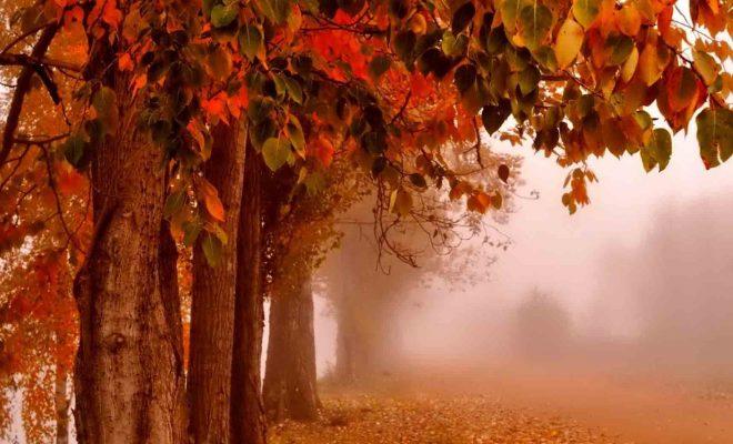 پیشنهاد سفر در پاییز