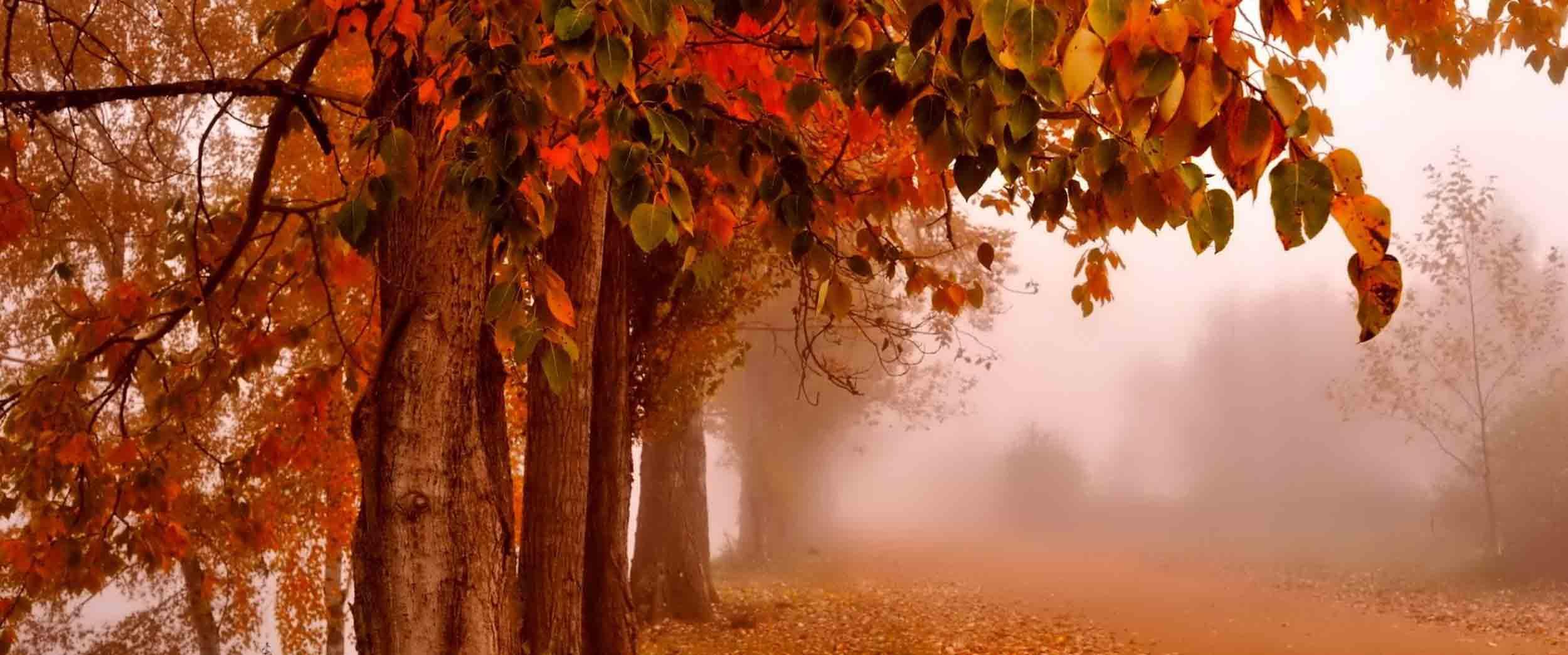 چند پیشنهاد برای سفر در پاییز در داخل ایران