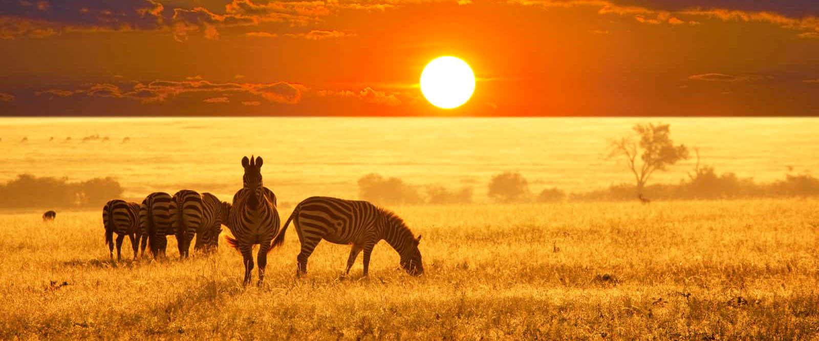 جاهای دیدنی آفریقا برای آنان که حیات وحش دوست دارند
