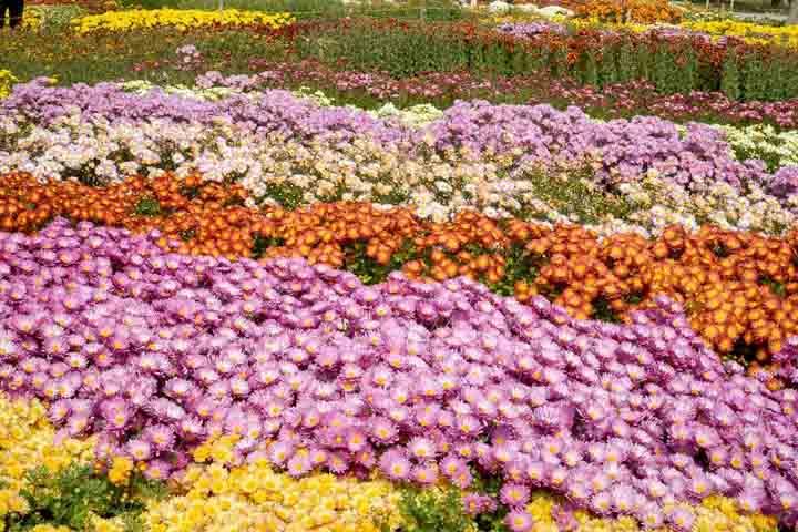 جاهای دیدنی مشهد در پاییز باغ گیاه شناسی