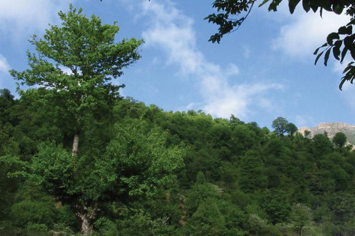 جنگل اولنگ   جاهای دیدنی سمنان