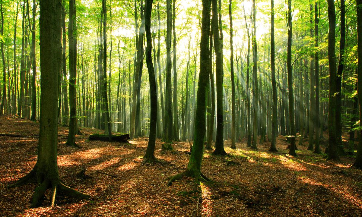 جنگل راش ، مقصدی بی نظیر برای طبیعتگردی