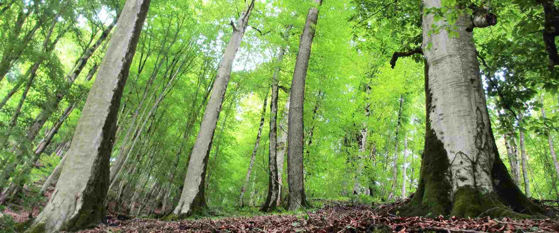 جنگل جهان نما ، سفری به بام سبز شمال