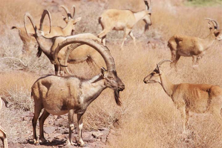 پارک ملی کویر   جاهای دیدنی سمنان
