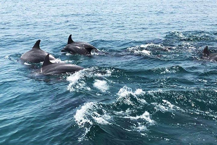 دلفین های بازیگوش در جزیره هنگام