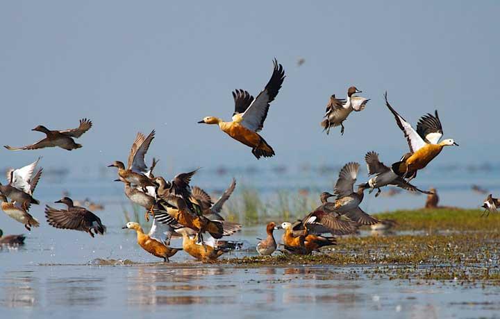تالاب گمیشان ؛ از جاهای دیدنی بندر ترکمن که میزبان پرندگان مهاجر است