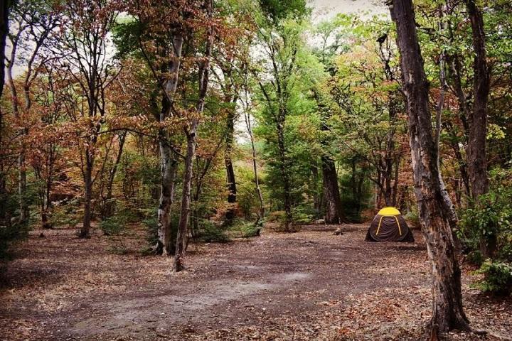کمپ در جنگل ابر
