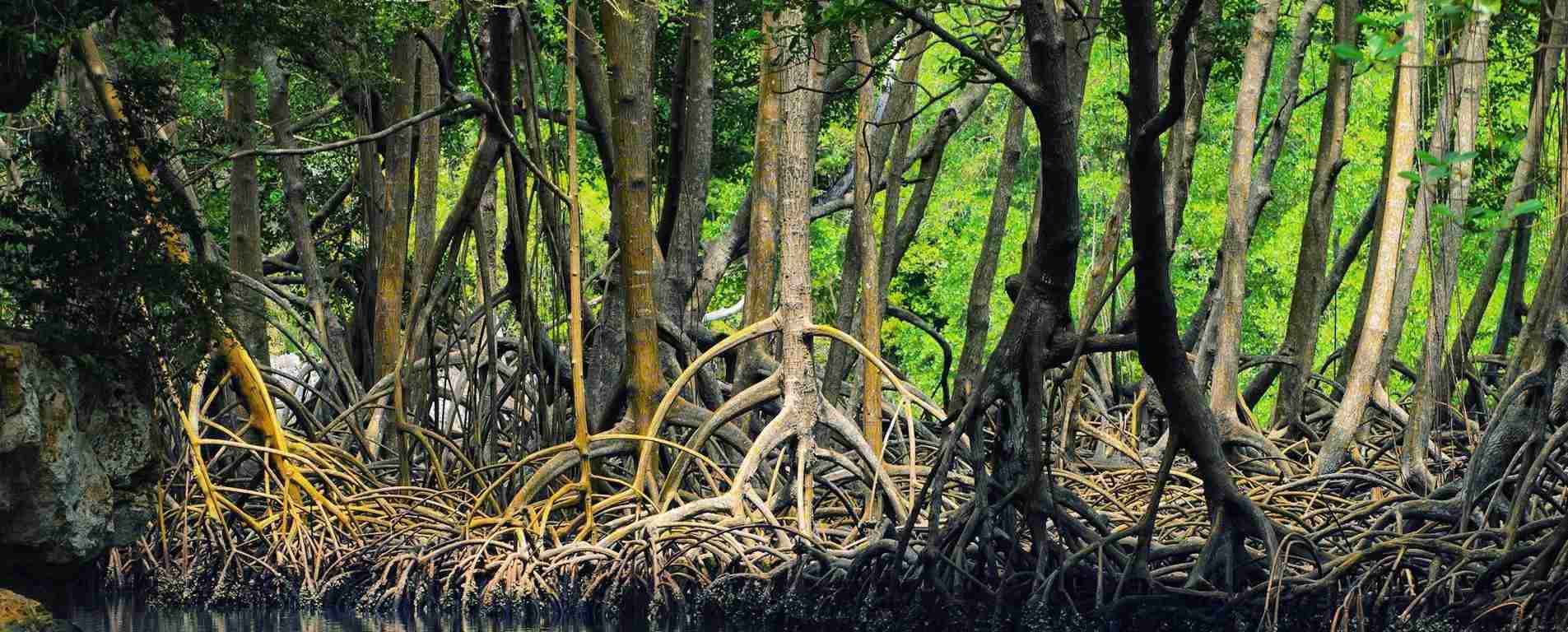 جنگل حرا : وقتی از شوری اشک و آب، درخت میروید!