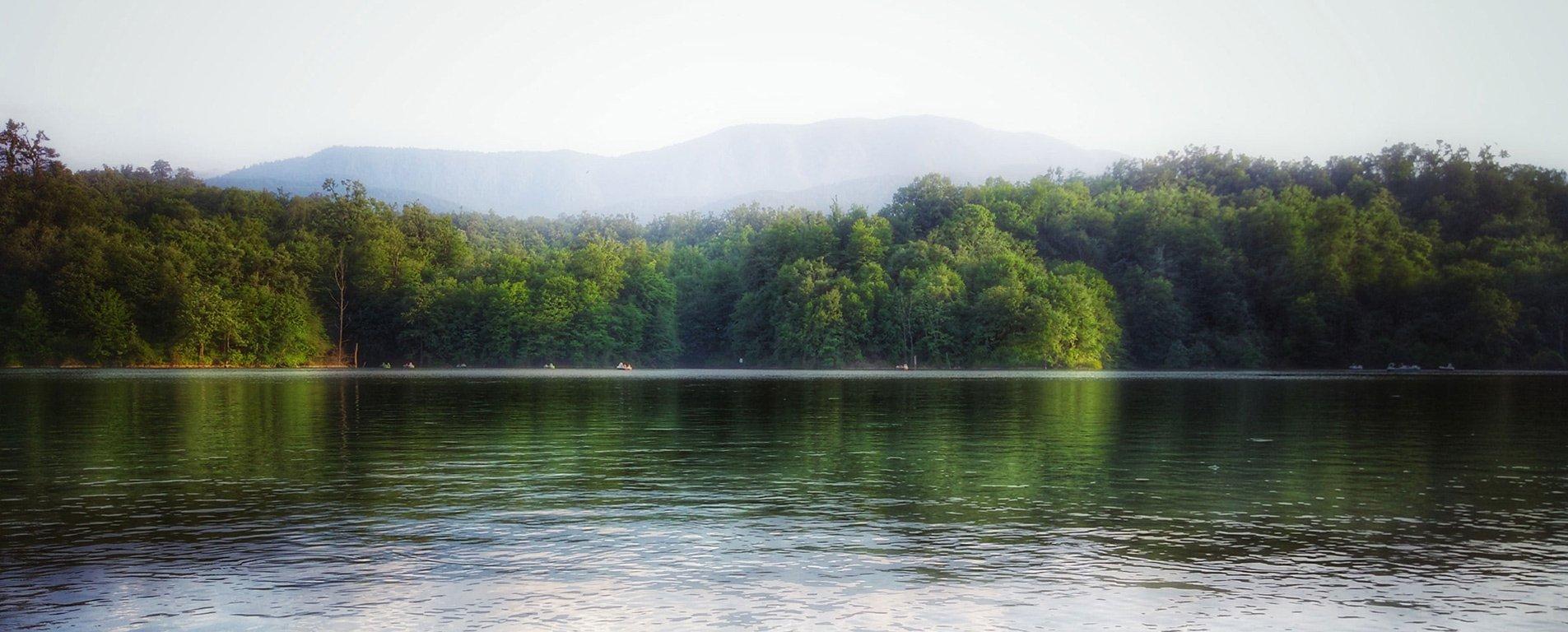 دریاچه الیمالات ، آبگیری در آغوش درختان