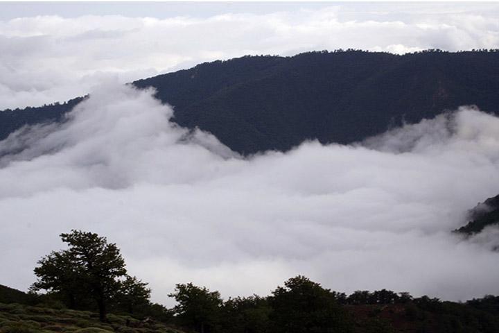 کهنسالی زیبای جنگل ابر در جوار ابرها