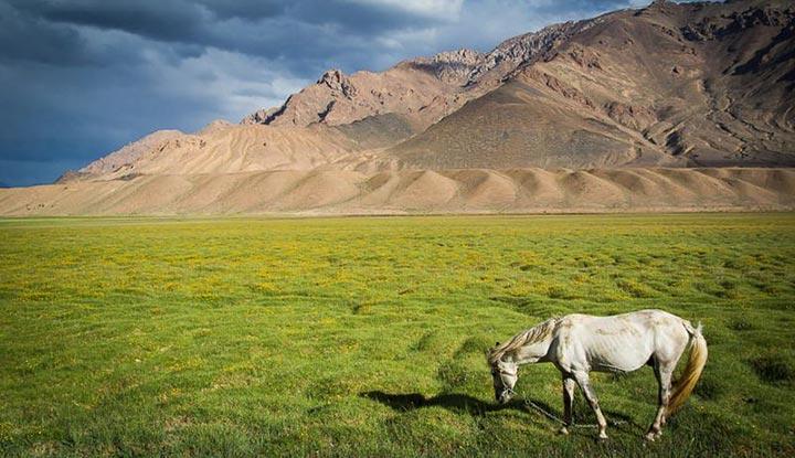 اسبها در دشتهای وسیع مورغاب میرقصند
