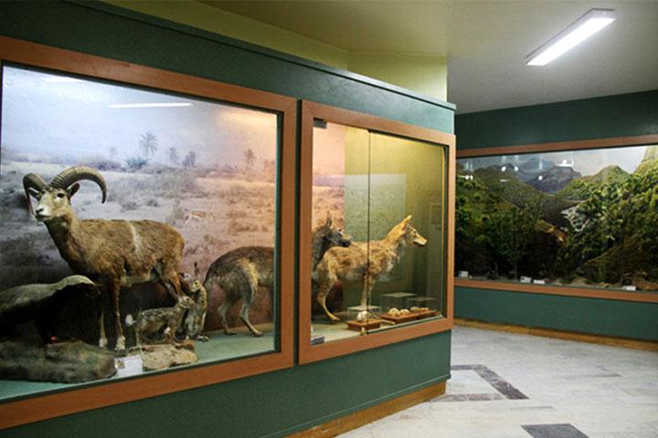 موزه تنوع زیستی آبادان - از مراکز تفریحی آبادان