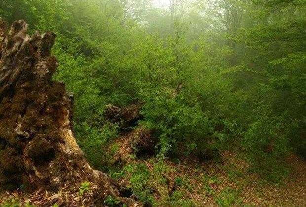 جنگل الیمستان - شاخص