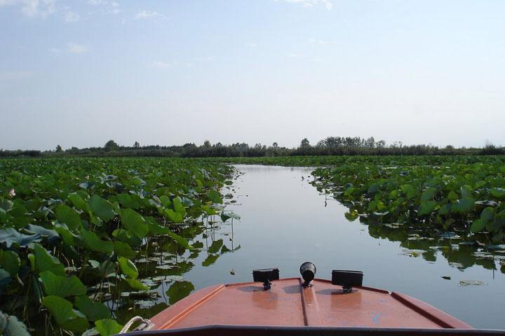 قایق سواری در تالاب انزلی