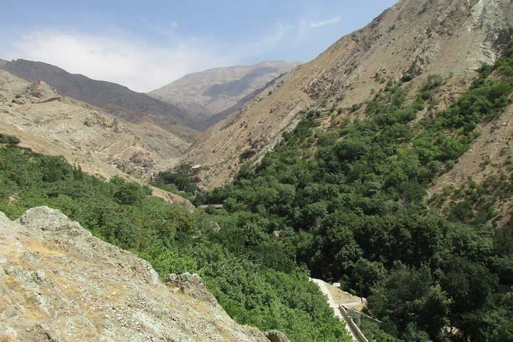 جنگل کارا در مسیر پیاده روی درکه تهران