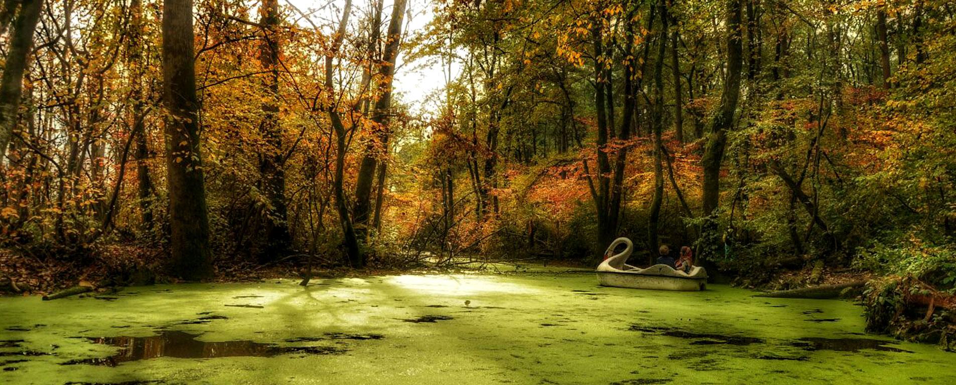 پارک جنگلی سراوان ، جنگلی تماشایی در شهرِ بارانهای نقرهای