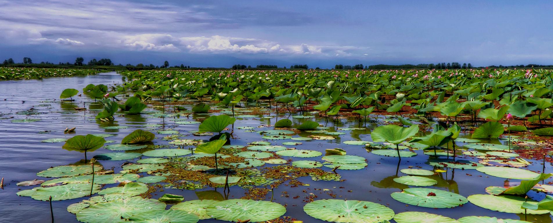 تالاب انزلی ؛ تلفیق شگفت انگیز طبیعت از خشکی و دریا