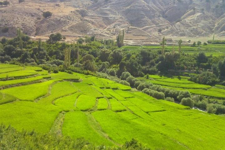 باغملک خوزستان