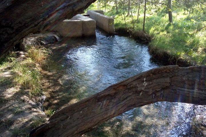چشمه قطری | جنگل ابر