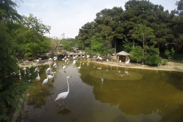 باغ پرندگان پارک جنگلی لویزان