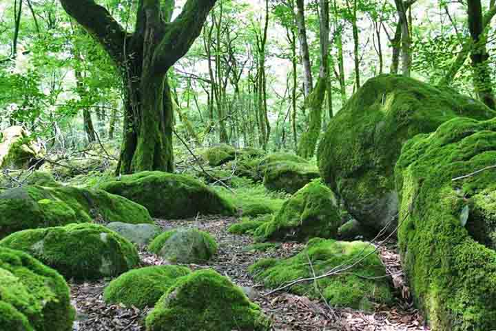 جنگل های دوهزار