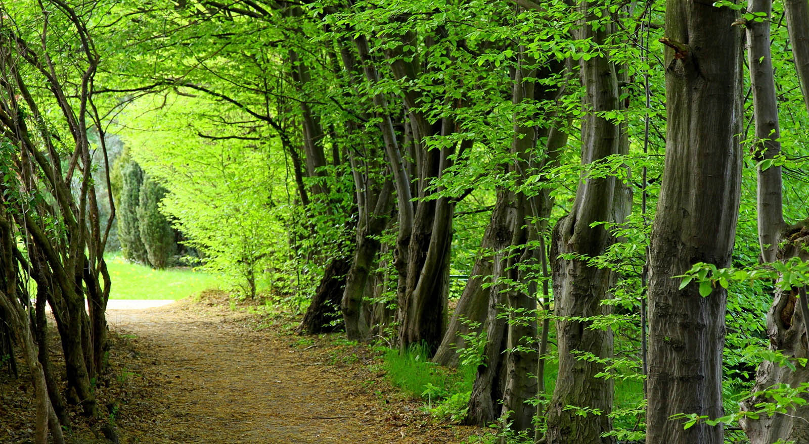 جنگل سیسنگان نگین سبز استان مازندران و تلاقی جنگل و دریا | سفرزون