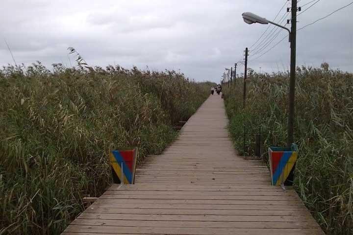 پل چوبی کیاشهر | مراکز تفریحی گیلان