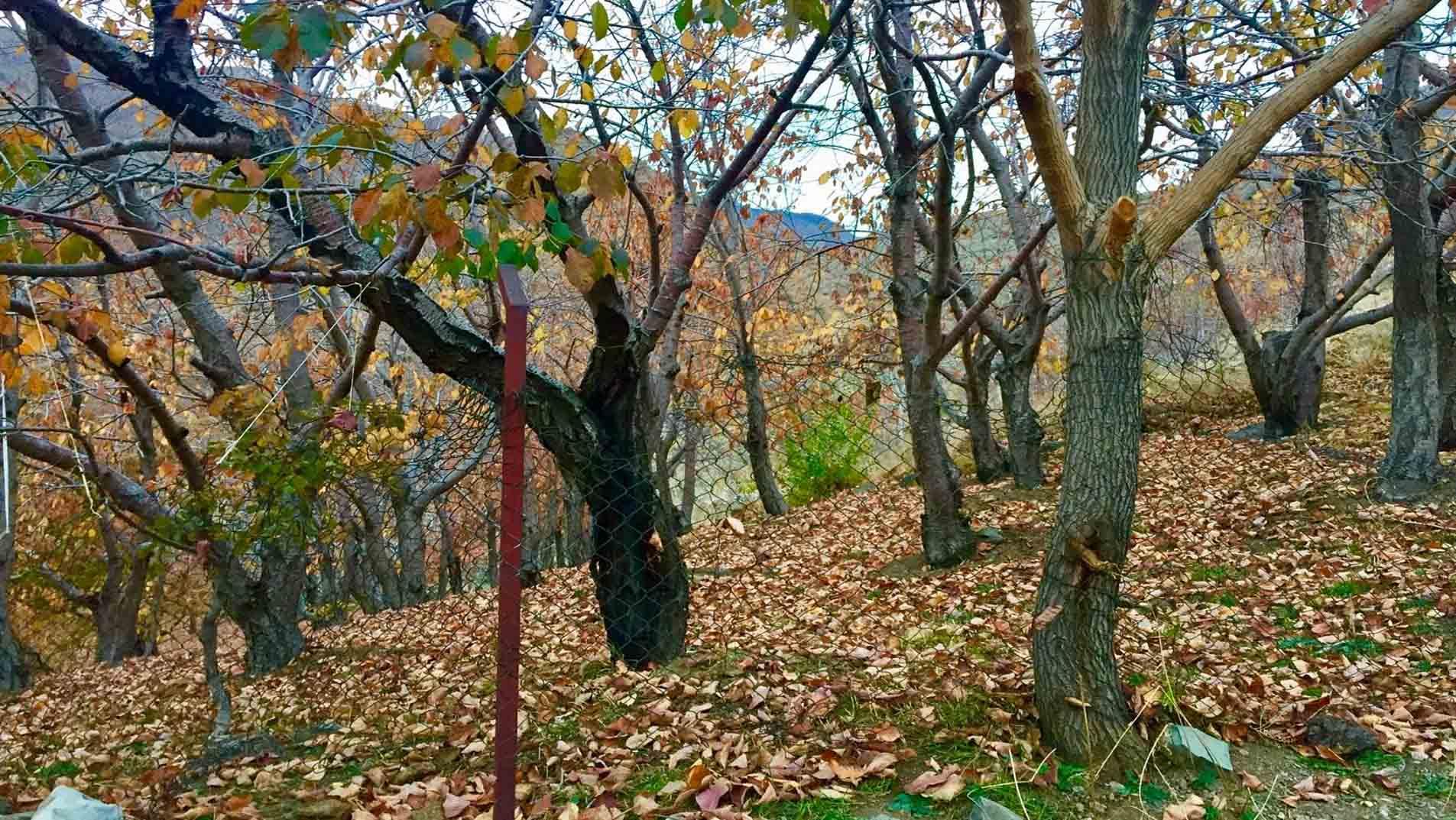 روستای افجه ؛ سرزمین درختان گردو و افرا در دل تهران