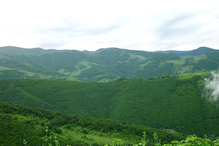جنگل آینالو