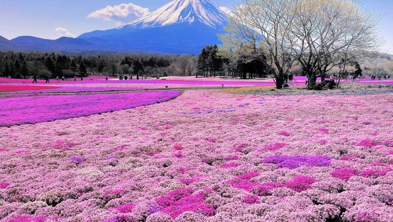 پارک هیتاچی ژاپن ؛ زیبای وصفناپذیر