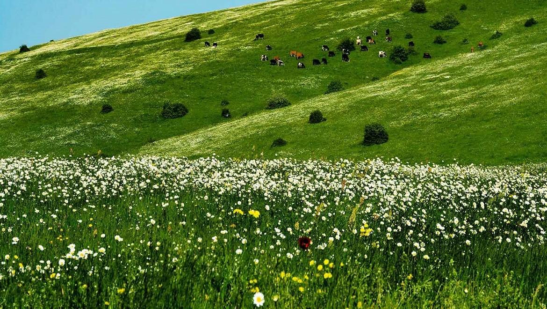 جنگل فندقلو ، بهشتی مینیاتوری در مرز استان اردبیل و گیلان