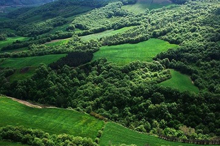 جنگل نقله بر | جاهای دیدنی گیلان