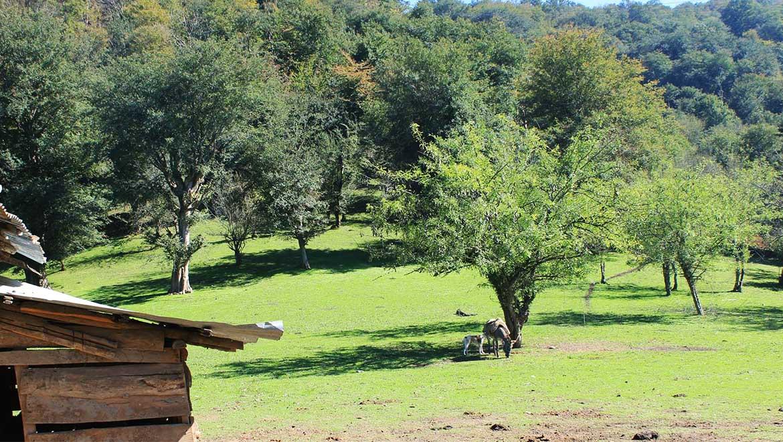 جنگلهای هیرکانی ثبت جهانی شد
