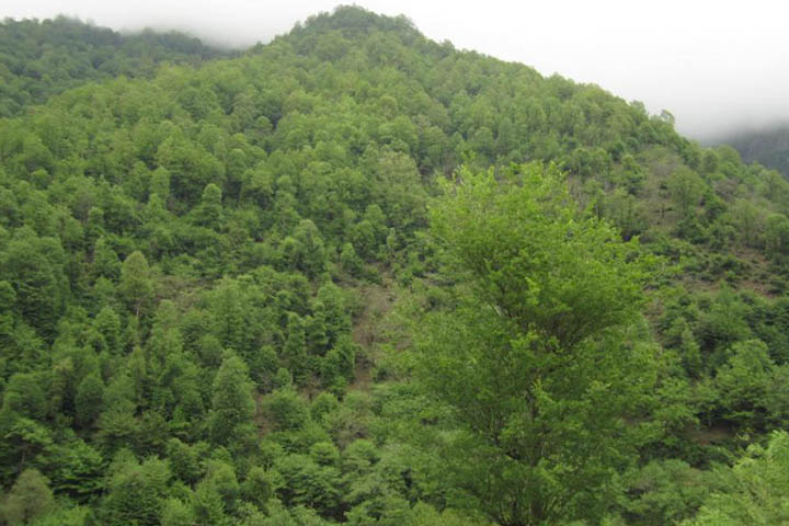 پارک جنگلی سفیدآب