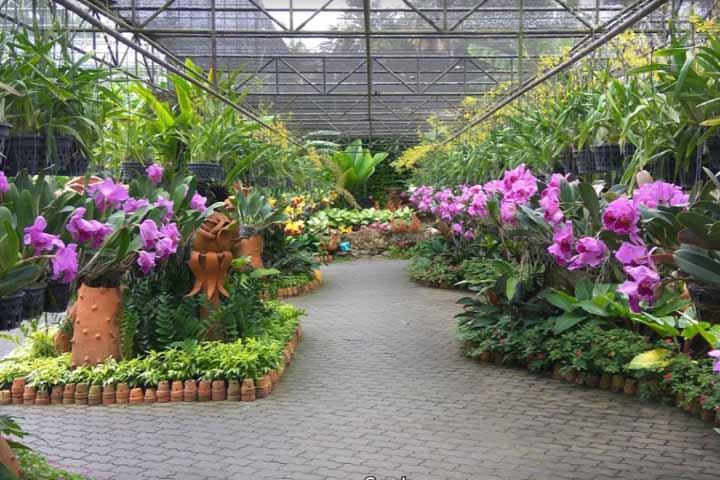 گیاهان ویژه در باغ گیاهشناسی