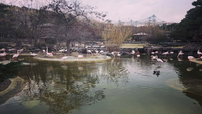 باغ پرندگان تهران ، آمیزهای از طبیعت بکر خداوند و هنر انسان