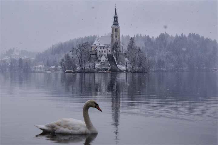 گونه های جانوری دریاچه بلد اسلوونی