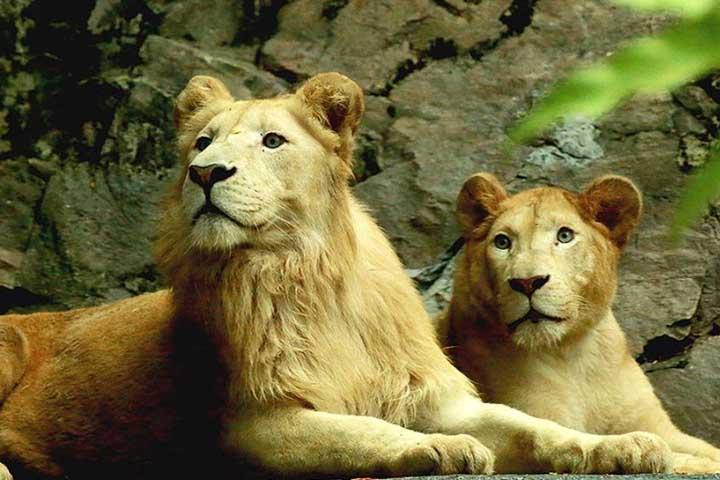 باغ وحش سان وی لاگون