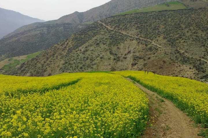طبیعت روستای پاقلعه