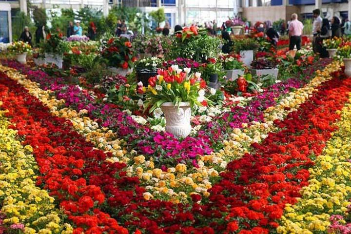 دهکده گل