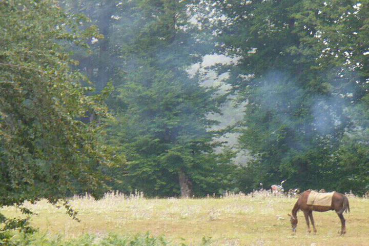 جنگل سیاه خانی