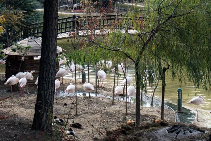 بهترین زمان بازدید از مجموعه باغ پرندگان تهران