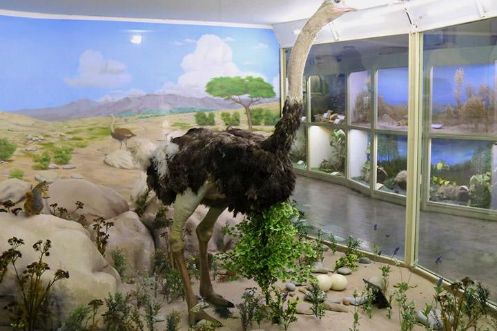 موزه تاریخ طبیعی همدان